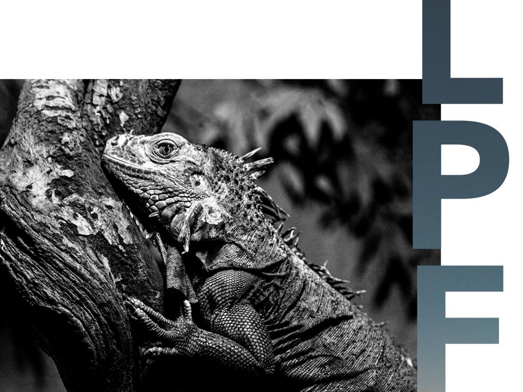Warrant et autres animaux - La Peyrouse Finance